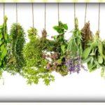 Fűszernövények nevelése könnyen, otthon!